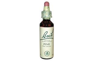Pine ( Pin Sylvestre ) - Fleur de Bach n°24