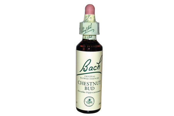 chesnut-bud-20-ml-fleur-de-bach-originale