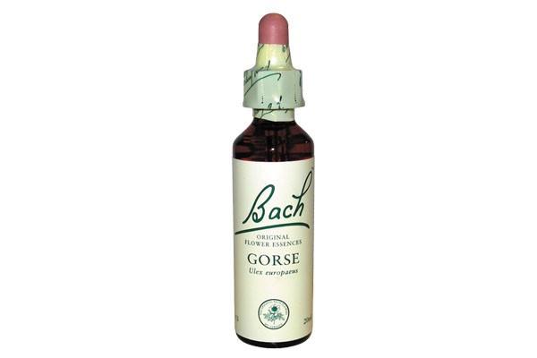 gorse-20-ml-fleur-de-bach-originale-ajonc