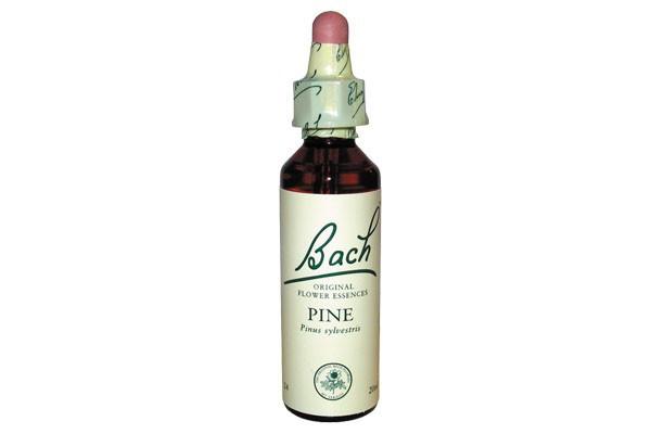 pine-20-ml-fleur-de-bach-originale-pin-sylvestre