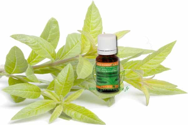 huile-essentielle-mandarine-verte-bio-cinier-b-germedevie