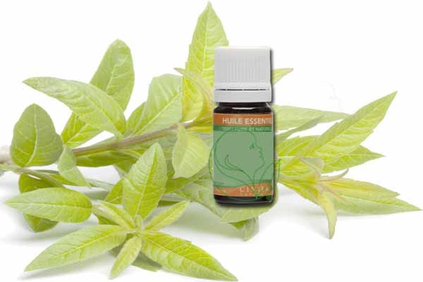 huile-essentielle-geranium-bio-germedevie